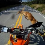 Watch a Motorcyclist Hit a Deer, Then Leave as if Nothing Had Happened
