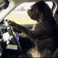 dogs-driving-car-new-zealand