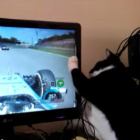 Cat-wants-to-race