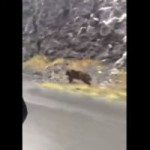 <!--:en-->Yes, a grizzly bear can catch up<!--:--><!--:fr-->Oui, un ours grizzly peut vous rattraper <!--:-->
