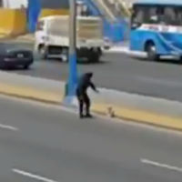 Cop-saves-dog-in-traffic