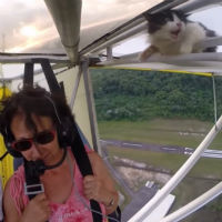 Kitty-first-flight